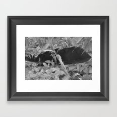 Black plume Framed Art Print