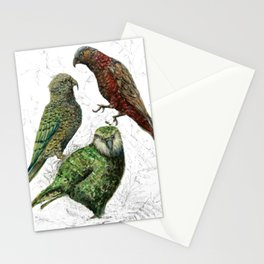 Three native parrots of New Zealand Stationery Cards