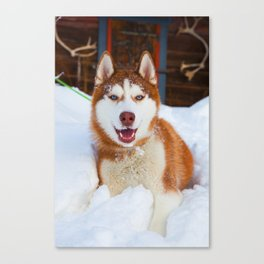 Hero in the snow 02 Canvas Print