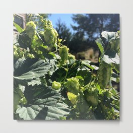 Beer Hops  Metal Print