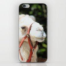 Ivory Camel iPhone & iPod Skin