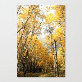 Golden Walk Through Aspen Lane Canvas Print