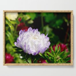 aster with water drops in autumn Serving Tray