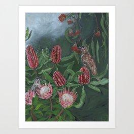 Australian Wattlebird amongst Banksia, Protea Flowers and Eucalypts Art Print