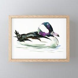 Bufflehead Duck Framed Mini Art Print