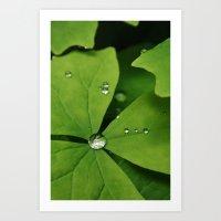 Washington Dew Art Print