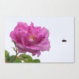 Irresistible Attraction Canvas Print