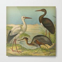 3 Cranes Metal Print