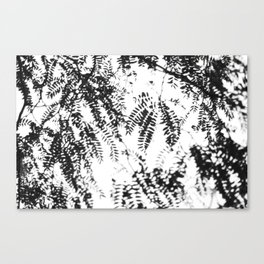 Leaves imprinted on the sky Canvas Print
