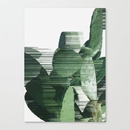 Assorted Cactus Canvas Print