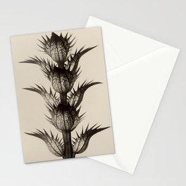 Acanthus Mollis Karl Blossfeldt Stationery Cards
