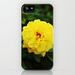 Autumn Yellow Rose iPhone Case