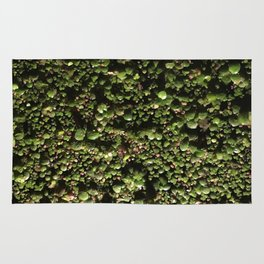Ivy Leagues. Fashion Textures Rug