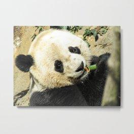 Bao Bao the Giant Panda Metal Print
