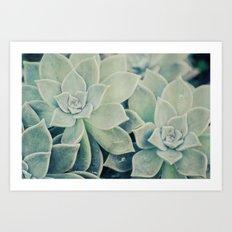 Botanical -- Jade, Mother-of-pearl, Ghost Plant Leaves Art Print