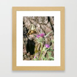 Scarce Swallowtail Butterfly and Thistle Framed Art Print