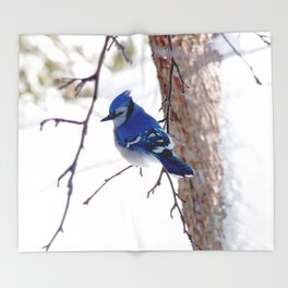 Blue Jay in winter 2 Throw Blanket