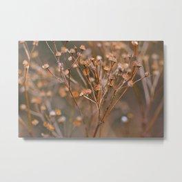 Seeds Metal Print