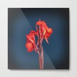 Canna Lily Metal Print
