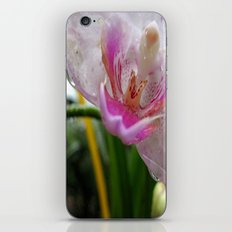 Orchid Mornings iPhone & iPod Skin