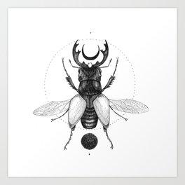 Sun Beetle Art Print