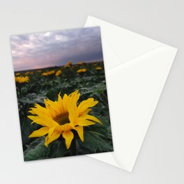 SUN BLOOM Stationery Cards