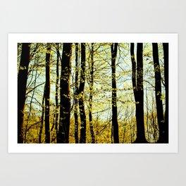 Green forest Art Print
