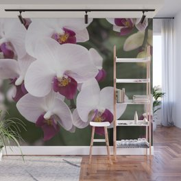 Longwood Gardens Orchid Extravaganza 4 Wall Mural