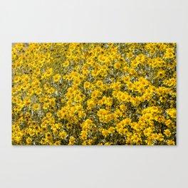 Super Bloom 7295 Paradise Joshua Tree Canvas Print