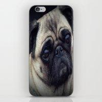 pug iPhone & iPod Skins featuring Pug by Malgorzata Zabawa