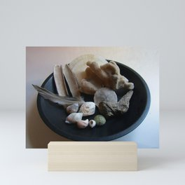 Beach Curiosity Collection Display Mini Art Print