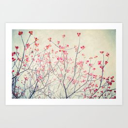 Ruby and Rose Quartz -- Red Pink Dogwood Tree in Flower Art Print