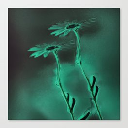 two green daisies Canvas Print