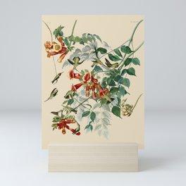 Vintage Hummingbird Illustration - Birds of America Mini Art Print