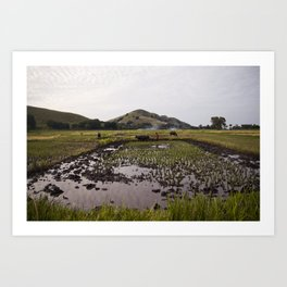 Rice paddy Art Print