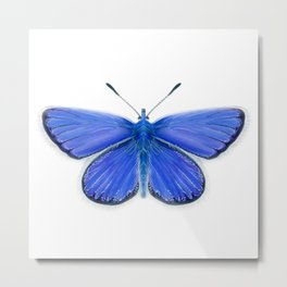Adonis Blue Butterfly Watercolor Artwork Insect Painting Metal Print
