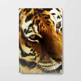 Tigers eye  Metal Print