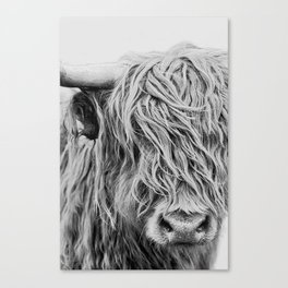 Scottish Highland Cow - Curls Canvas Print