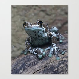 Blue tree frog Canvas Print