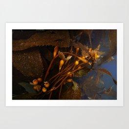 Sea Kelp Art Print
