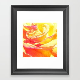 Love and Peace Pastel Rose Framed Art Print
