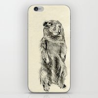 beaver iPhone & iPod Skins featuring Beaver by Amy Veried