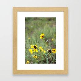 Bonito Framed Art Print
