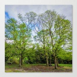 The six trees Canvas Print