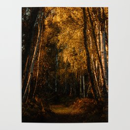 Harsh Autumn Light at Holme Fen Poster