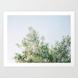 The olive tree   Italy fine art travel photography   Ostuni art Art Print