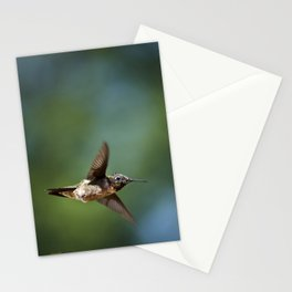 Hummingbird Swoop Stationery Cards