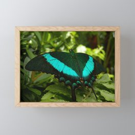 Emerald Swallowtail Butterfly Framed Mini Art Print