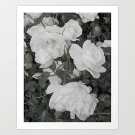 Pale Rose Art Print