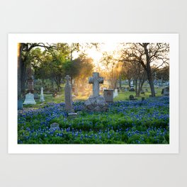 Bonnets at Rest - Austin Texas Art Print